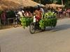 Vign_cambodge_042