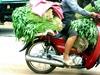 Vign_cambodge_096_bis