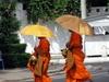 Vign_cambodge_178